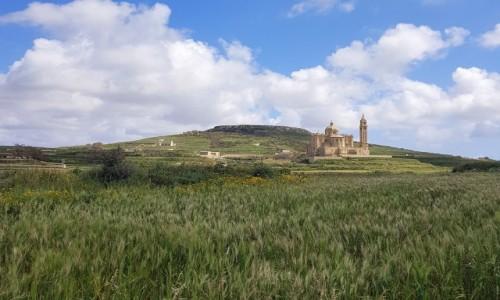 Zdjecie MALTA / Gozo / Bazylika  Ta'Pinu / Pośród łanów zbóż