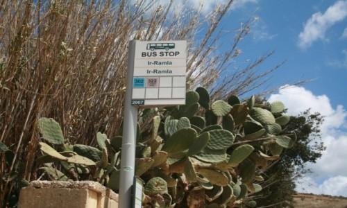 Zdjecie MALTA / Gozo / Ramla Bay / Przystanek