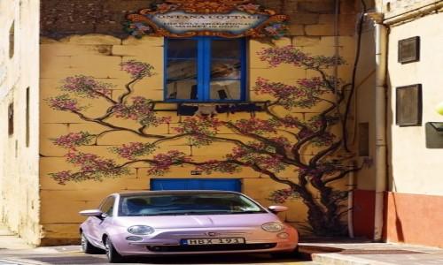 Zdjęcie MALTA / Gozo / ... / Fontana Cottage