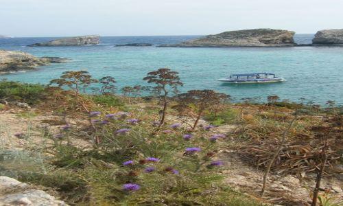 Zdjęcie MALTA / comino / blue lagoon / lodka