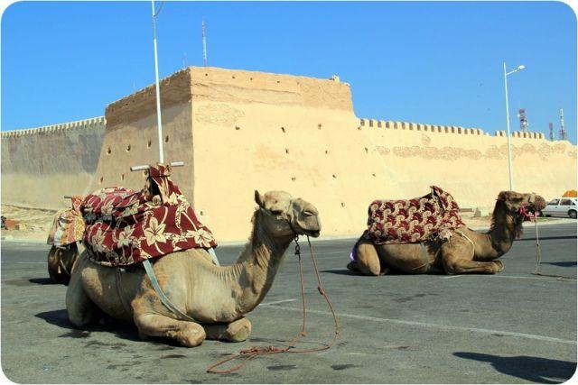 Zdjęcia: AGADIR, Czekając na klienta, MAROKO