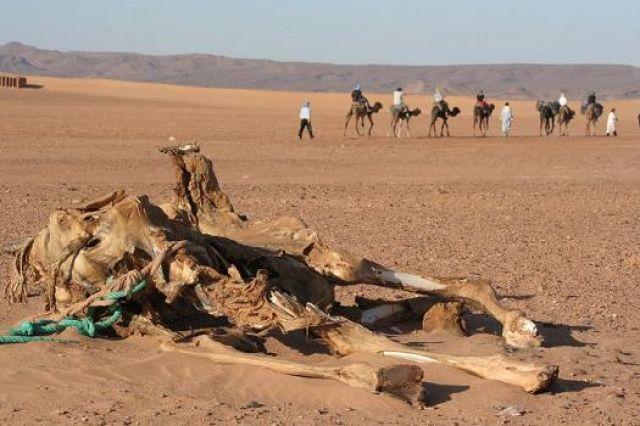 Zdj�cia: mhamid, pustynia zabiera..., MAROKO