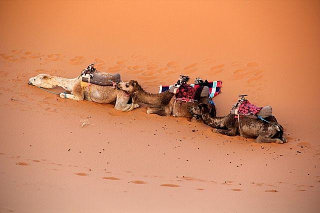 Zdjęcia: okolice Erfoud, południowo-wschodni kraniec Tafilant, Sahara #18, godz. 19:38., MAROKO