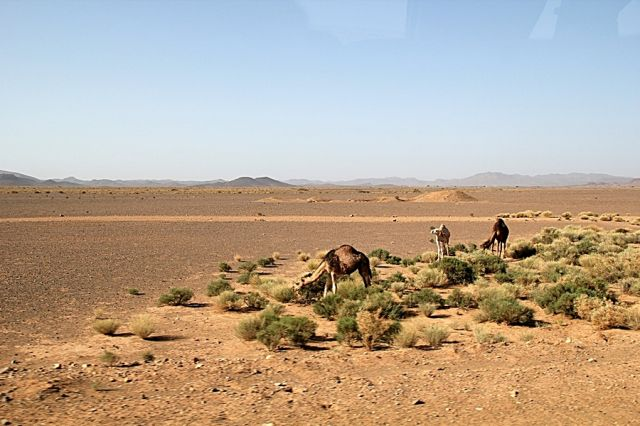 Zdjęcia: w drodze do Tineghir, Kamienista pustynia, MAROKO