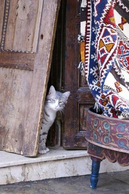 Zdjęcia: Raban, kot, MAROKO