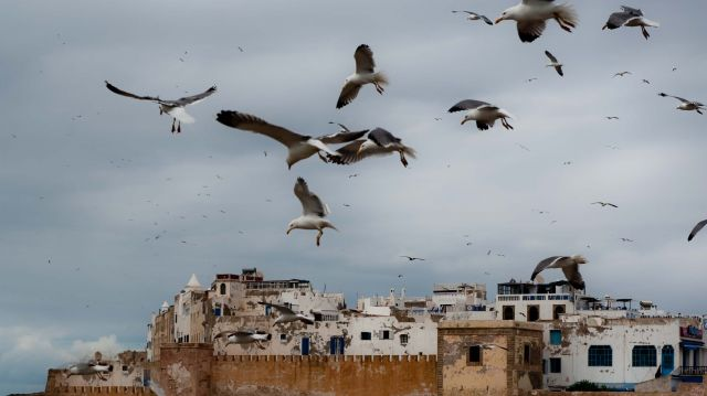 Zdjęcia: Essaouira, Essaouira jeszcze raz, MAROKO