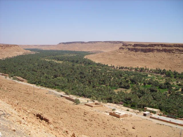 Zdj�cia: maroko, maroko, palmy, palmy, palmy..., MAROKO