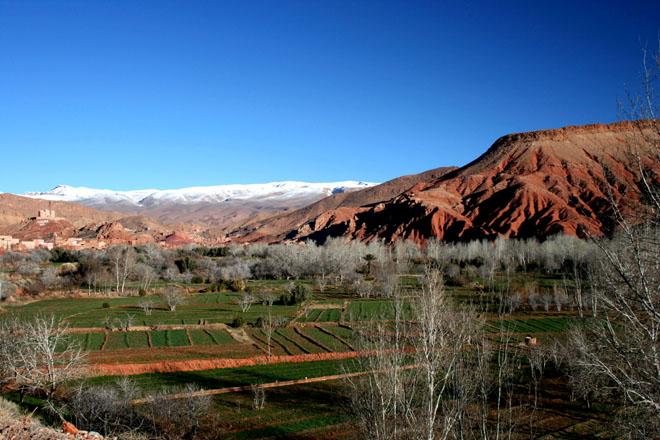 Zdjęcia: Dolina Dades, Maroko, ogrody, MAROKO