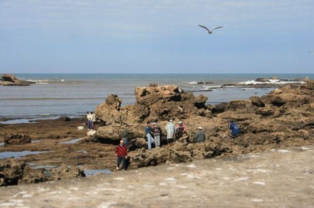 Zdjęcia: Es-Sawira, wybrzeże Maroka, Rybacy miasta Es-Sawira, MAROKO