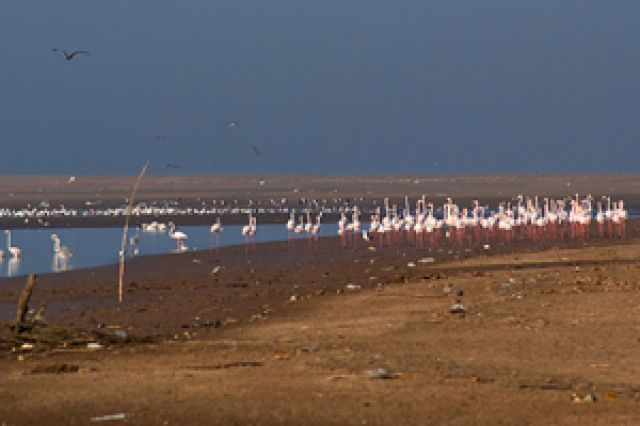 Zdjęcia: Agadir,  Susaria, Esuarium rzeki Sus, MAROKO