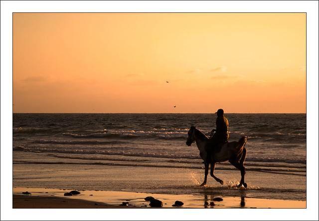 Zdjęcia: Agadir, Koń, MAROKO