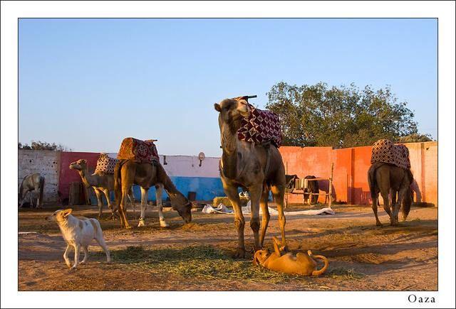 Zdj�cia: Agadir, W oazie, MAROKO
