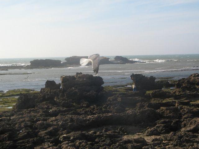 Zdjęcia: Es-Sawira, wybrzeze, MAROKO