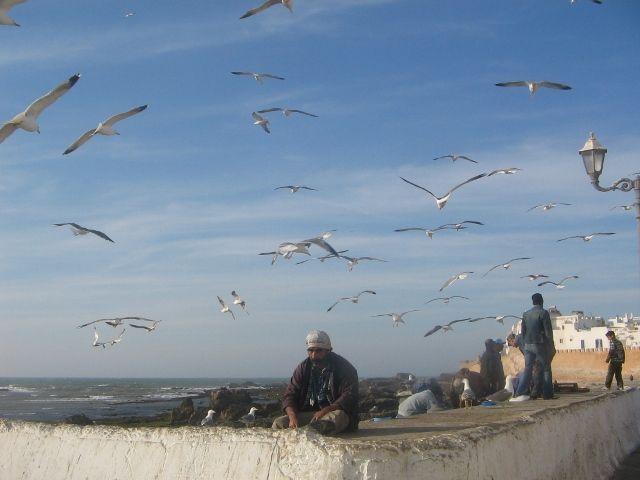 Zdjęcia: Es-Sawira, mezczyzna wsrod ptakow, MAROKO