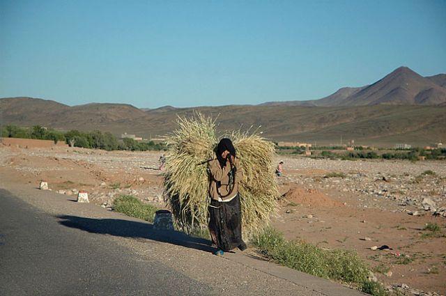Zdjęcia: Tinerhir - przy drodze, Tinerhir, rola kobiet ;)- praca ?, MAROKO