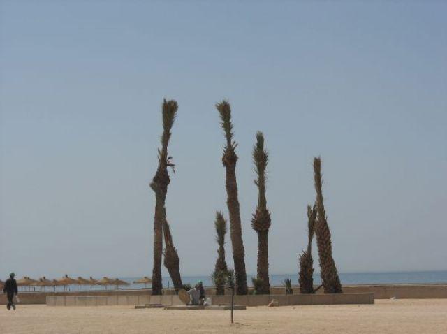 Zdj�cia: Agadir, Wiosna w Maroku, MAROKO