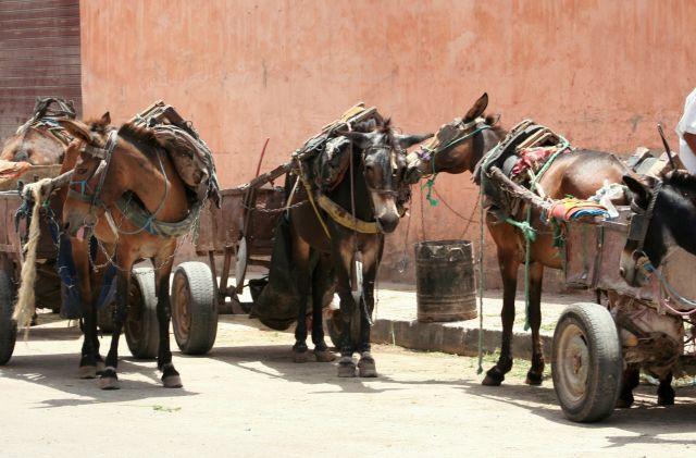 Zdjęcia: marrakesz, postoj, MAROKO