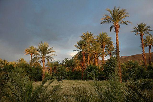 Zdjęcia: Tamnugalt, niedaleko Warzazat, gaj palmowy przed burzą, MAROKO