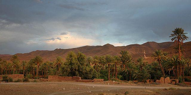 Zdjęcia: Tamnugalt, okolice Warzazat, gaj palmowy-panorama, MAROKO