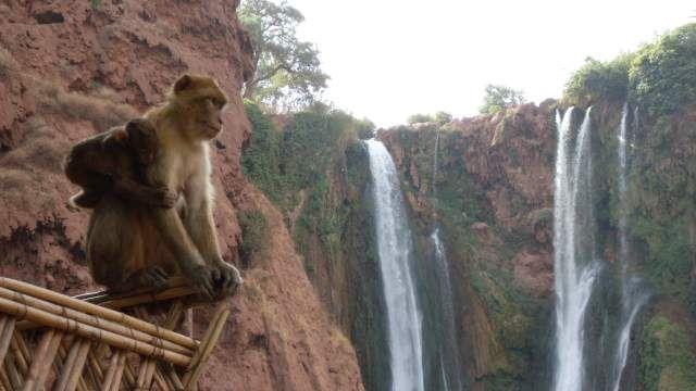 Zdjęcia: Ouzoud, wodospady i małpa, MAROKO