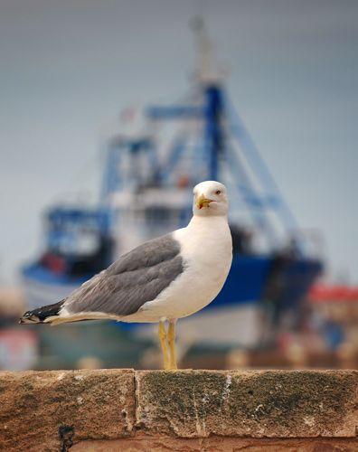 Zdjęcia: port w Essawira, Essawira, Essawira, MAROKO