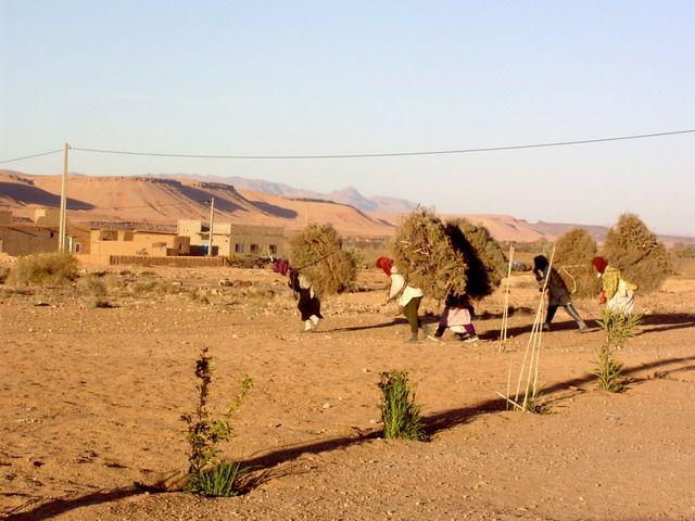 Zdjęcia: mała wioseczka, wyscigi, MAROKO