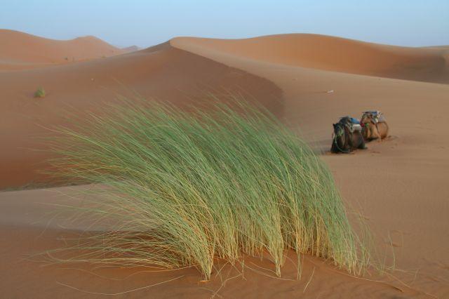 Zdjęcia: Erg Szebbi, Sahara Zach., Na pustyni, MAROKO