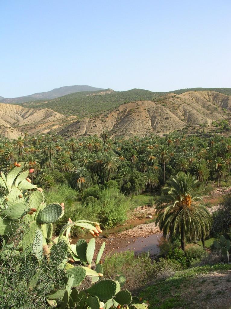 Zdjęcia: droga do Imouzzer, okolice Agadiru , Maroko to nie tylko pustynia, MAROKO
