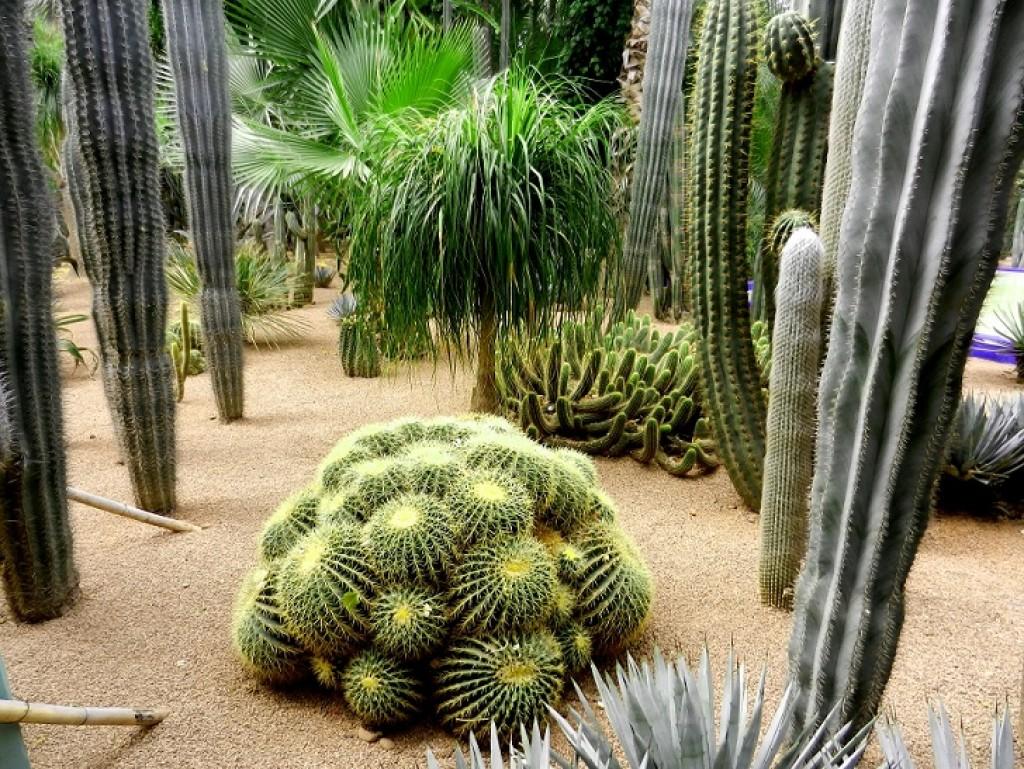 Zdjęcia: Marakesz, Kaktusy, MAROKO