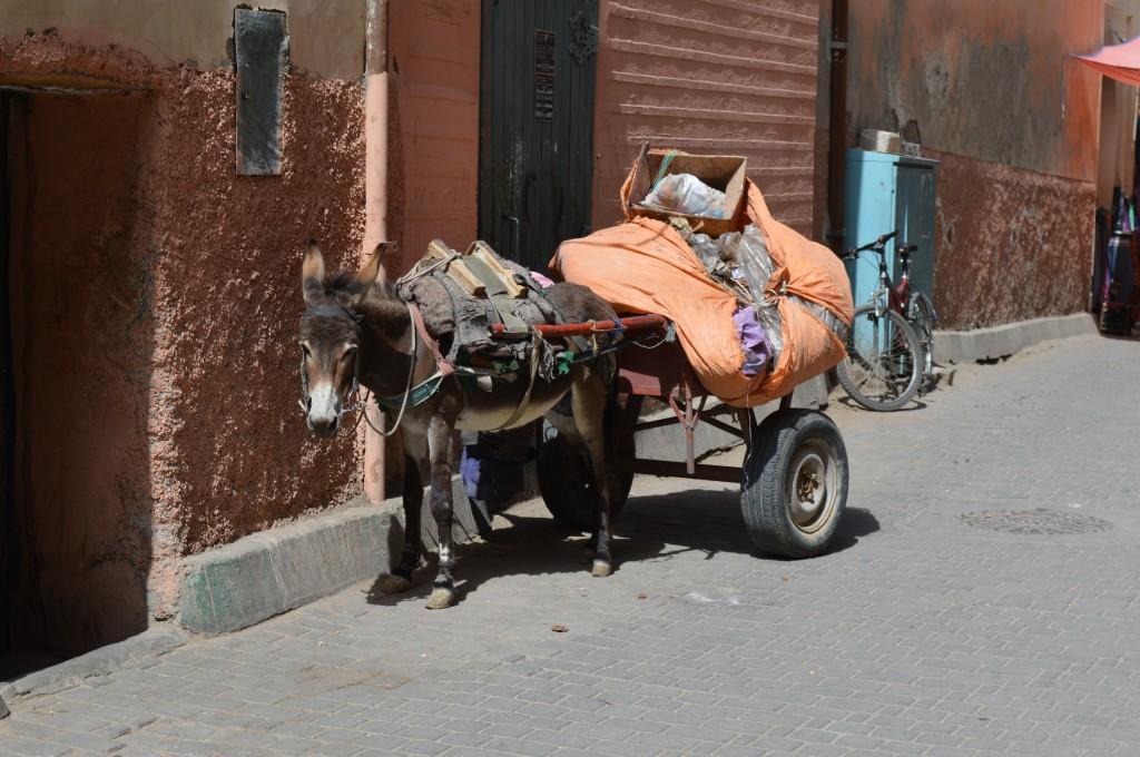 Zdjęcia: Ouarzazate, Ouarzazate, osiolek, MAROKO