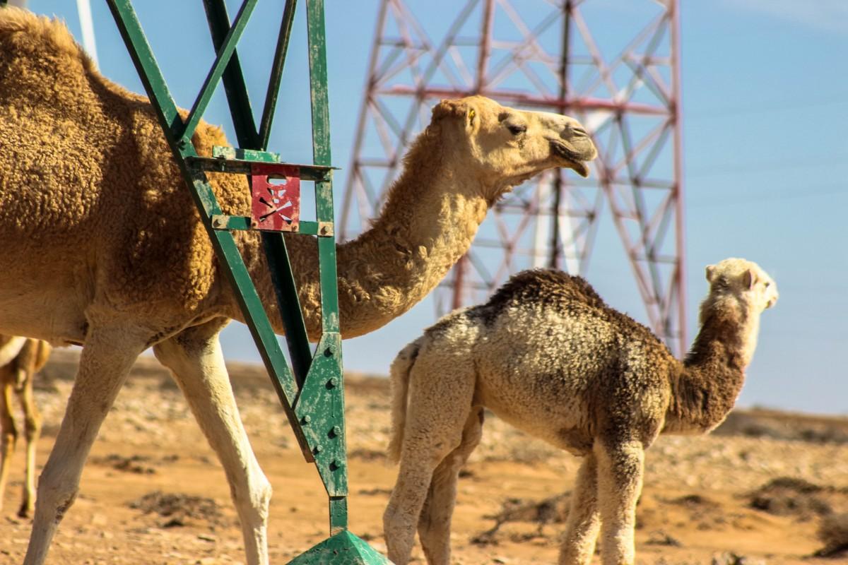 Zdjęcia: Zachodnia Sahara, Zachodnia Sahara, Niebezpieczeństwo, na drapaczce :) , MAROKO
