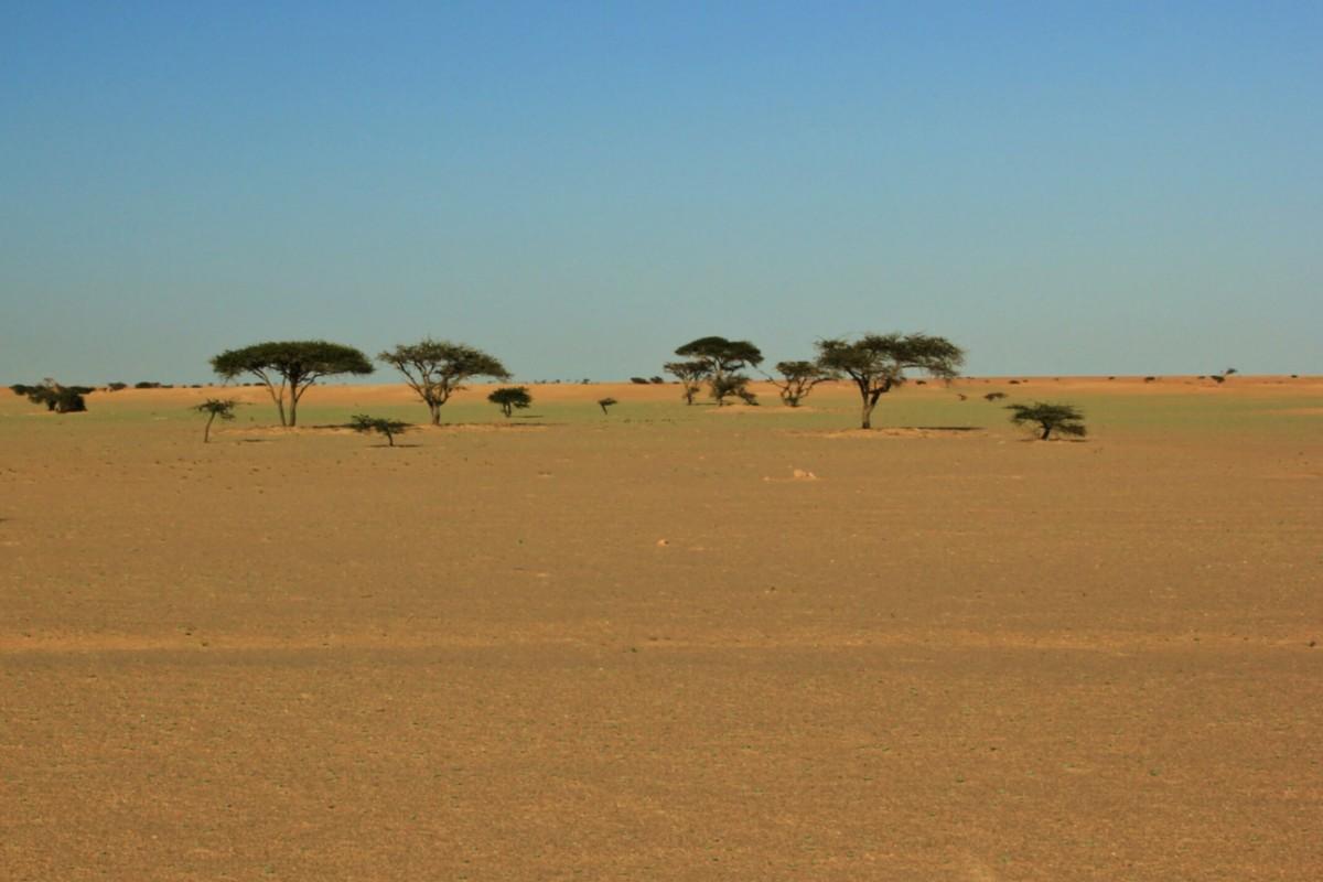 Zdjęcia:  Sahara, Sahara Zachodnia, Kolory pustyni, MAROKO
