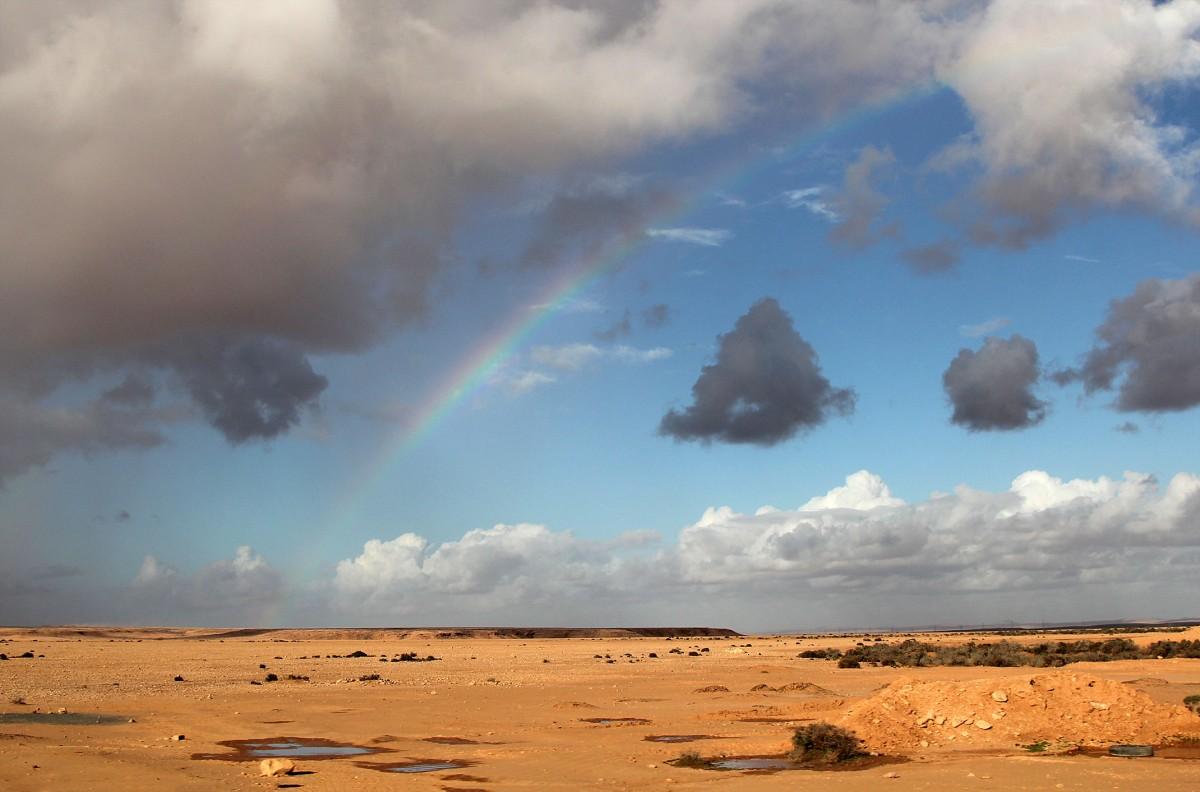 Zdjęcia: okolice El Hagunia, Sahara Zachodnia, Pustynia po deszczu, MAROKO
