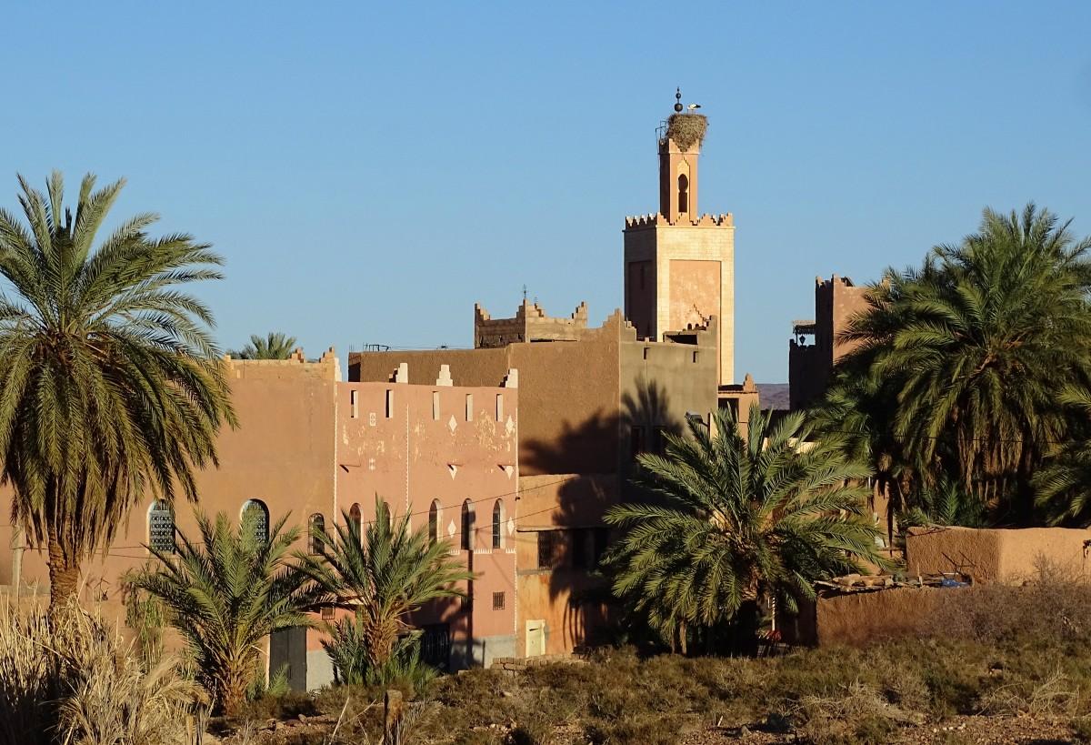 Zdjęcia: Ouarzazate, Południe, Na dowód, że jeszcze nie odleciały (do nas), MAROKO