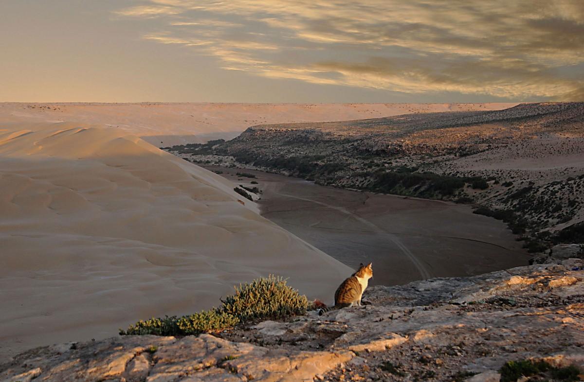 Zdjęcia: nad Oceanem Atlantyckim, Aoreora, Obserwator, MAROKO