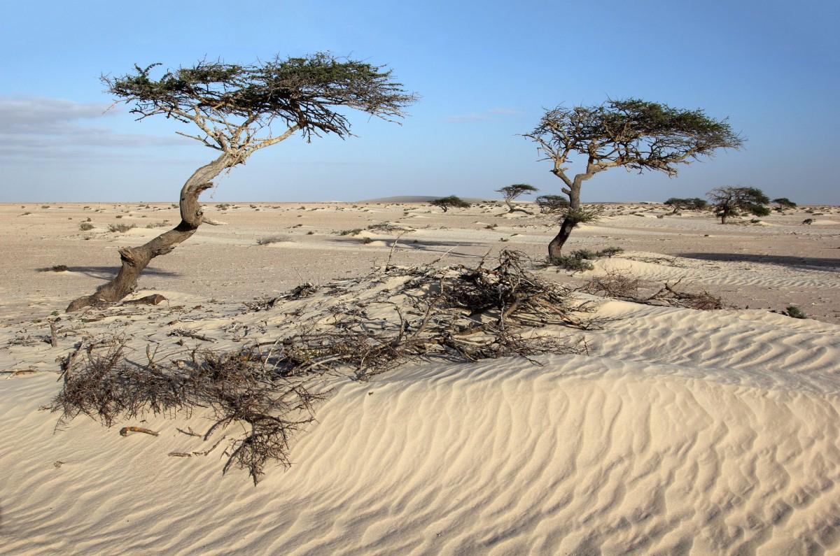 Zdjęcia: w piaskach Sahary, Sahara Zachodnia, Z wiatrem..., MAROKO