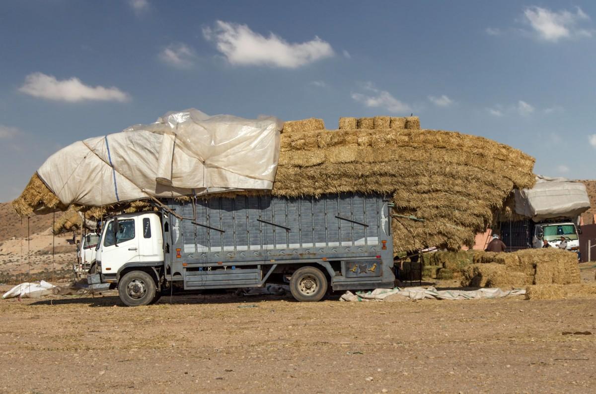 Zdjęcia: gdzieś po drodze, Maroko, Załadowany, MAROKO