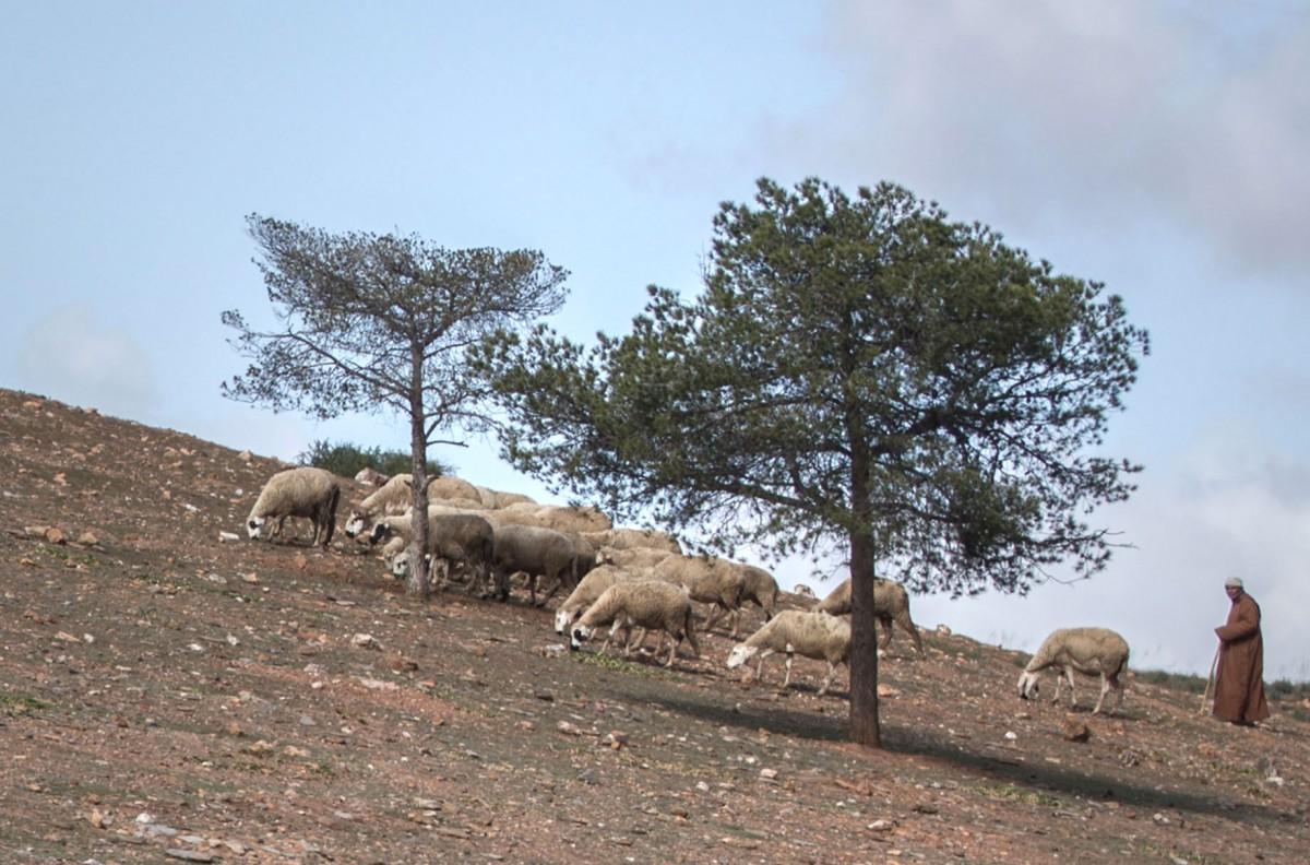 Zdjęcia: gdzieś po drodze, Maroko, Śniadanko, MAROKO