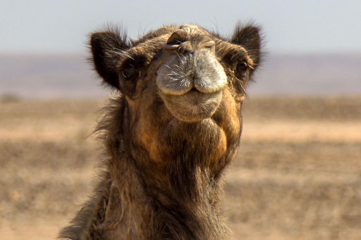 Zdjęcia: gdzieś po drodze, Sahara Zachodnia, Dzieńdoberek!, MAROKO