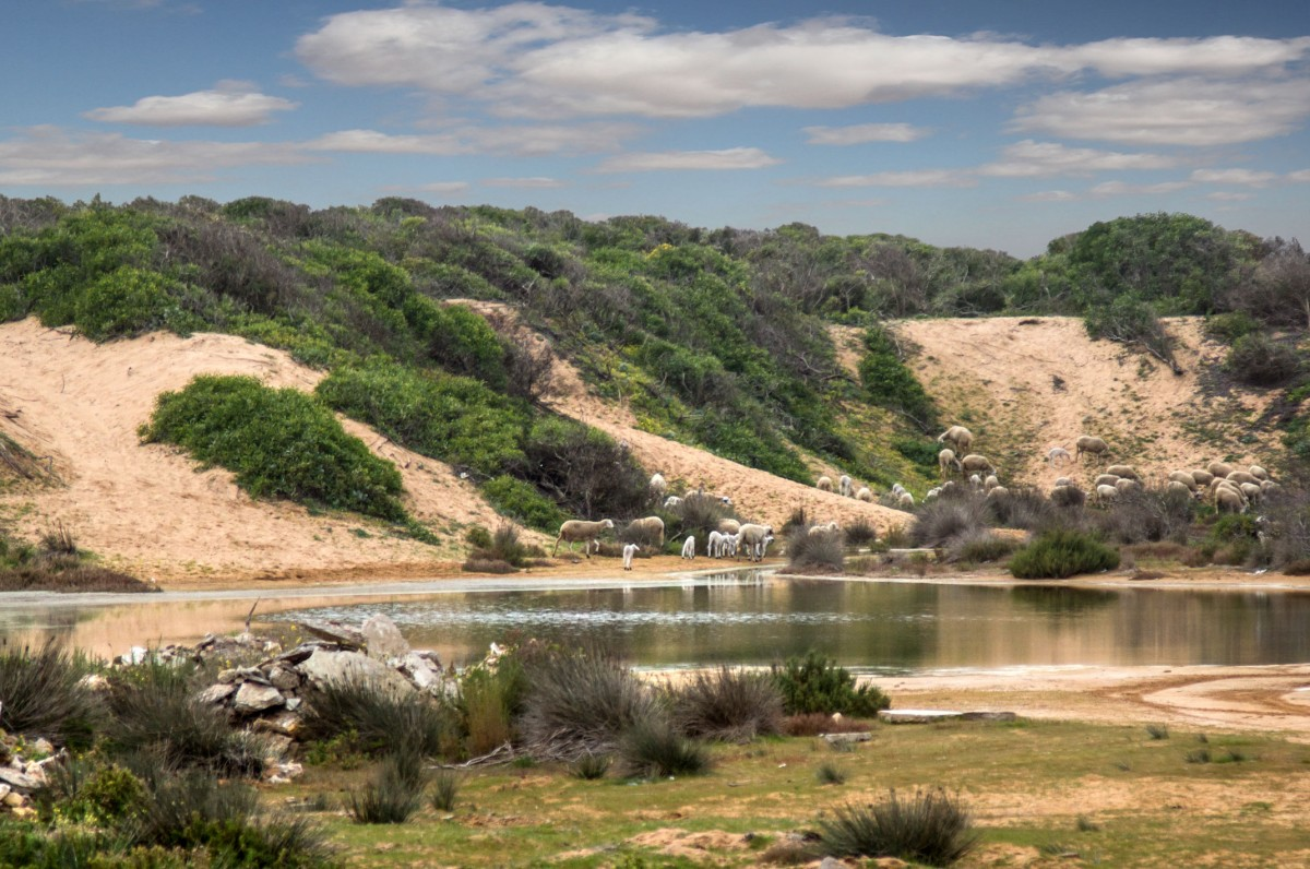 Zdjęcia: Loualidia, El Jadida, Uroki laguny, MAROKO