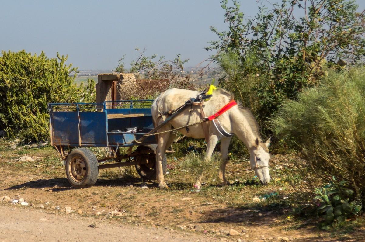 Zdjęcia: gdzieś po drodze, Maroko, Z rozwianą grzywą, MAROKO