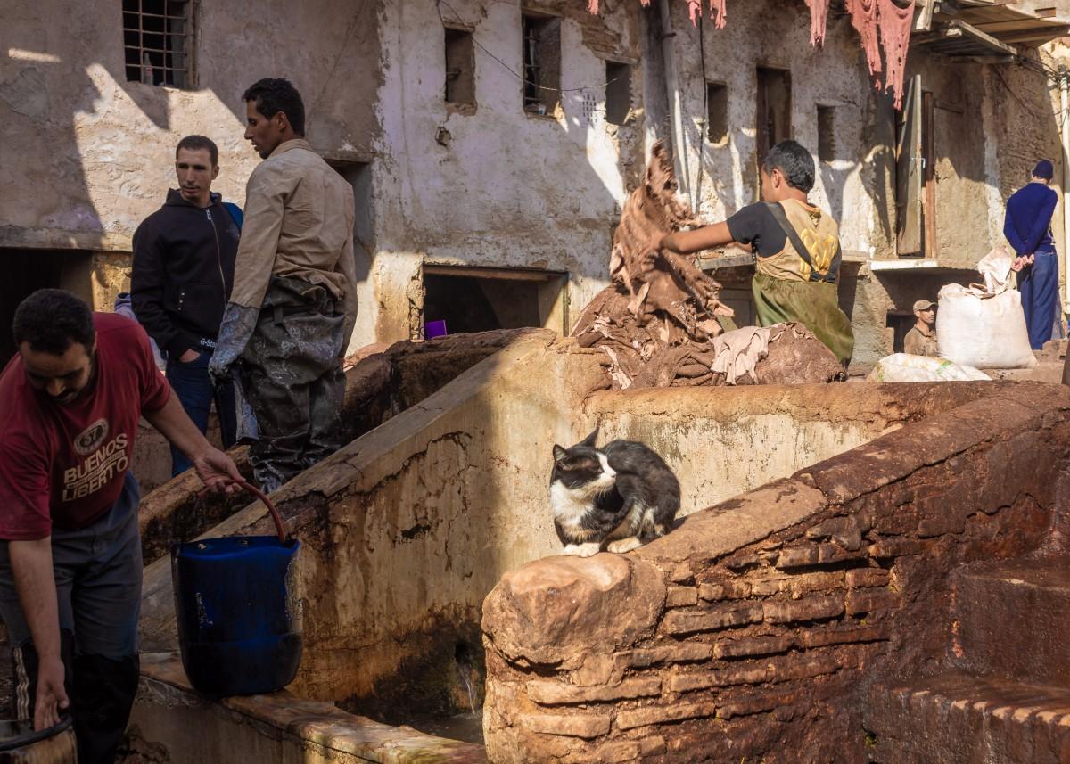 Zdjęcia: farbiarnia skór, Fez, Kot też w pracy, MAROKO