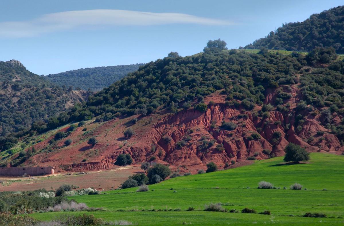 Zdjęcia: gdzieś po drodze, Maroko, Wiosennie..., MAROKO