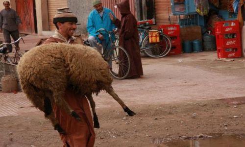 Zdjecie MAROKO / Taroudant / Suk Berberyjski / Spacer drwala z owcą