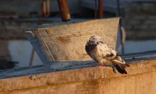 Zdjecie MAROKO / Agadir / Agadir / Chwila odpoczyn