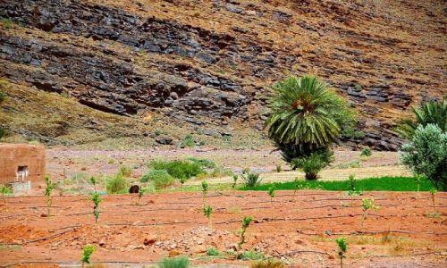 Zdjecie MAROKO / - / w drodze do Agdz / Południe Maroka