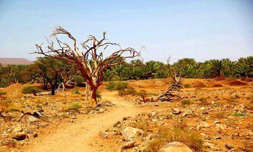 Zdjecie MAROKO / - / w drodze do Zagory / Temu drzewu już chyba nic nie pomoże