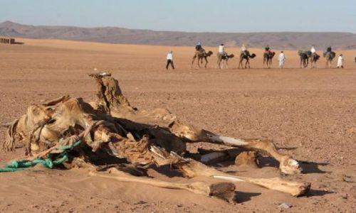 Zdjęcie MAROKO / brak / mhamid / pustynia zabiera...