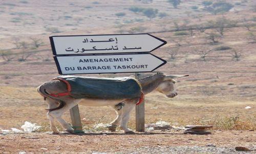 Zdjecie MAROKO / Maroko / w drodze, z zachodu na wschód / Ciężkie życie osła