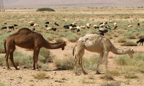 MAROKO / - / południe Maroka / spotkanie gdzies w drodze